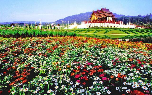 Image result for flower garden chiang mai