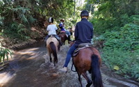 chiang mai adventure, chiang mai horse riding, chiang mai horse riding tour