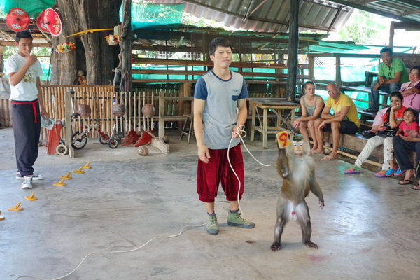 private tour mae rim, chiang mai tour, private tours chiang mai, maerim monkey school