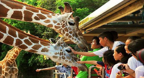 Chiang Mai Night Safari : Chiang Mai Attractions
