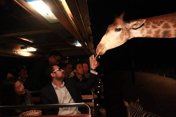 Chiang Mai Night Safari Tour : Visit behavior of animals closely