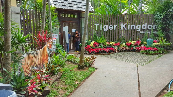 chiang mai tiger kingdom, tiger kingdom, attractions in chiang mai