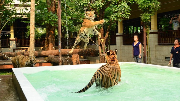 chiang mai wonder package, chiang mai packages, chiang mai tour packages, tiger kingdom