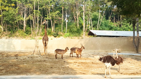 chiang mai animals planet package, chiang mai packages, chiang mai tour packages, chiang mai zoo