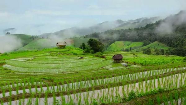 step rice field mae jam, mae jam, maejam, mae jam district, maejam district
