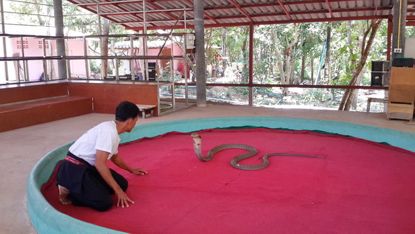 private tour mae rim, chiang mai tour, private tours chiang mai, maerim snake show
