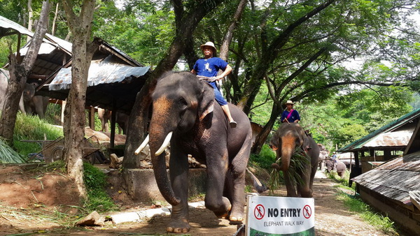 chiang mai wonder package, chiang mai packages, chiang mai tour packages, maesa elephant camp