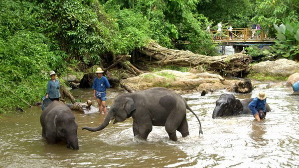 chiang mai animals planet package, chiang mai packages, chiang mai tour packages, mae sa elephant camp
