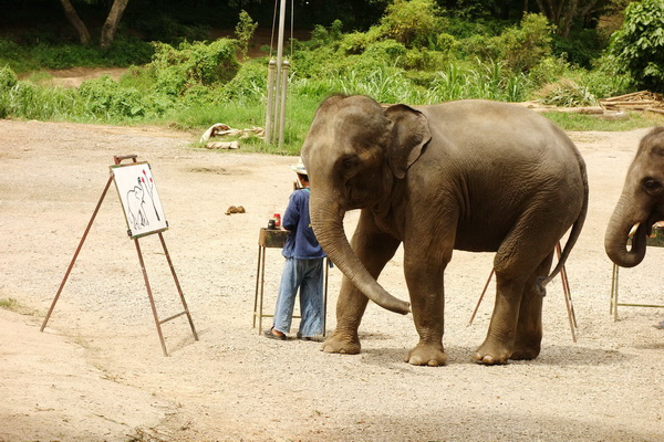 chiang mai nature package, package tours chiang mai, package tours in chiang mai, elephant safari tour