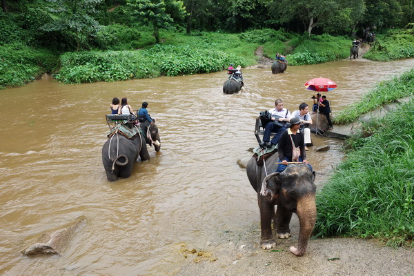 chiang mai elephant safari, elephant safari, elephant safari tour