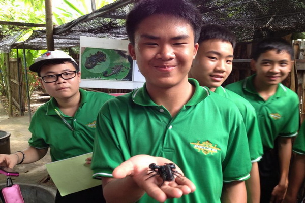 cchiang mai animals planet package, chiang mai packages, chiang mai tour packages, siam insect zoo