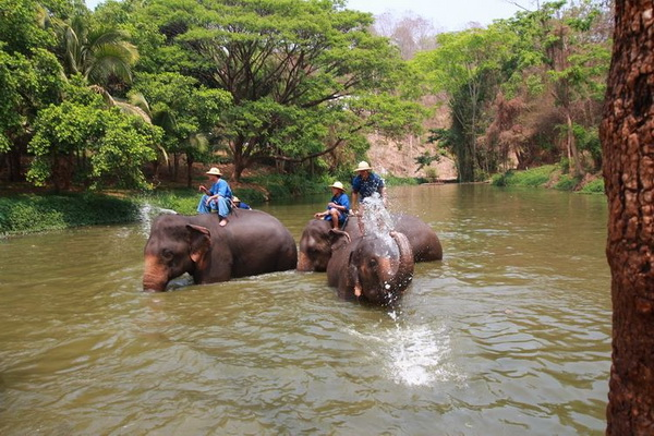 private tour elephant conservation center, private tours chiang mai, private tour elephant conservation