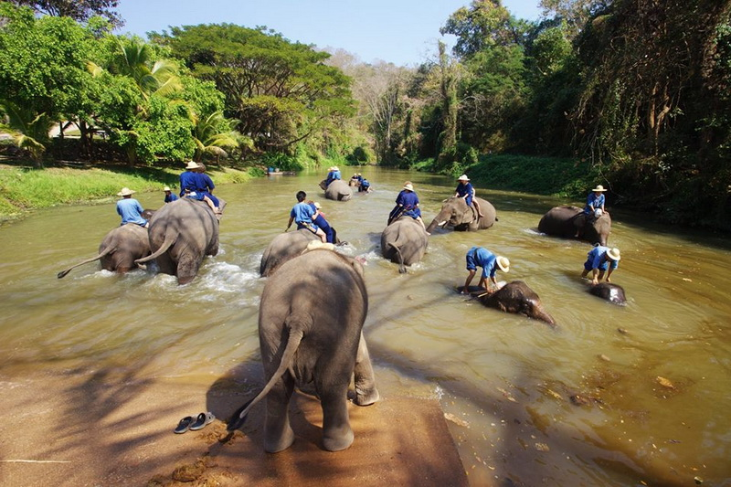 elephant conservation center, thai elephant conservation center, elephant conservation center lampang, thai elephant conservation center lampang, elephant conservation center at lampang, thai elephant conservation center at lampang, elephant hospital lampang, elephant hospital at lampang