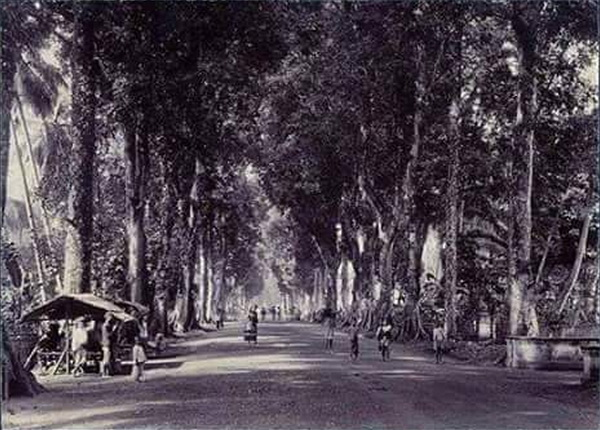 the rubber tree road, highway no.106, highway 106, highway no.106 chiang mai lamphun road, chiang mai lamphun road, chiang mai lamphun old road, the rubber tree road chiang mai lamphun, the rubber tree road highway 106