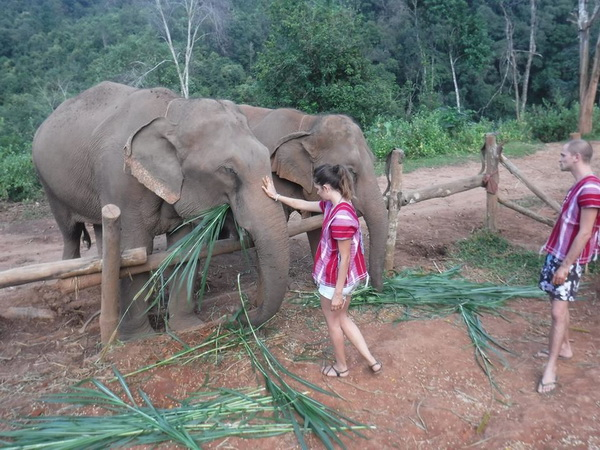 elephant jungle paradise  park,elephant jungle paradise  park chiang mai, chiang mai elephant volunteer, chiang mai elephant