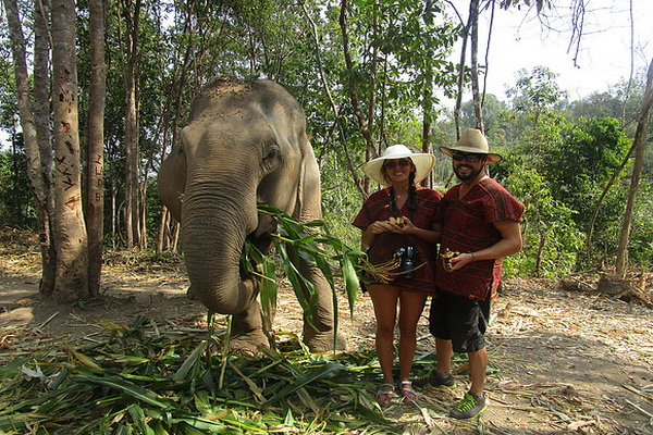 elephant jungle sanctuary, chiang mai care, chiang mai elephant volunteer, chiang mai elephant