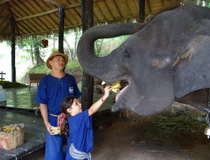 Chiang Mai Elephant Trainning Camp, Mae Sa Elephant Camp