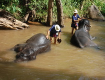 chiang mai mahout training, Mae Sa Elephant Camp