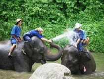 Chiang Mai Elephant Trainning Camp, Ban Bang Kud Elephant Camp