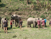Information for Elephant Training Camp in Chiang Mai