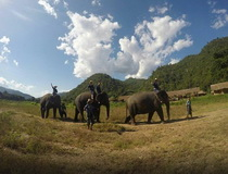 Elephant Trainning Camp in Chiangmai, Elephant Carer Home