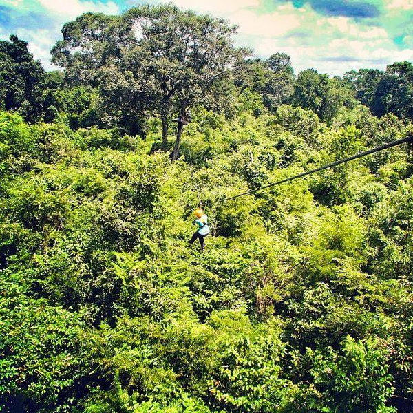flight of the gibbon, chiang mai zipline