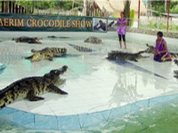 attractions in chiang mai, Chiang Mai Crocodile Show