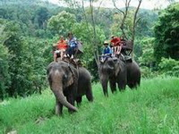 attractions in chiang mai, Maesa Elephant Camp