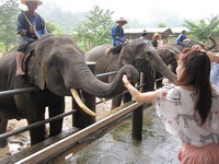 attractions in chiang mai, Mae Tang Elephant Park