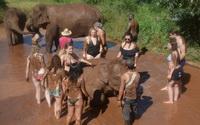 elephant jungle paradise park,elephant jungle paradise park chiang mai, chiang mai elephant volunteer, chiang mai elephant