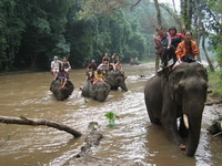 chiang mai tour packages, chiang mai elephant safari