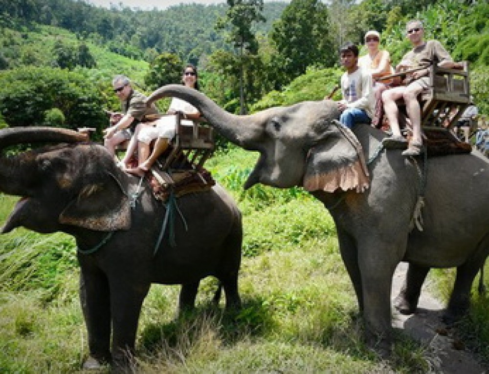 Budget03 : Elephant Safari Tour