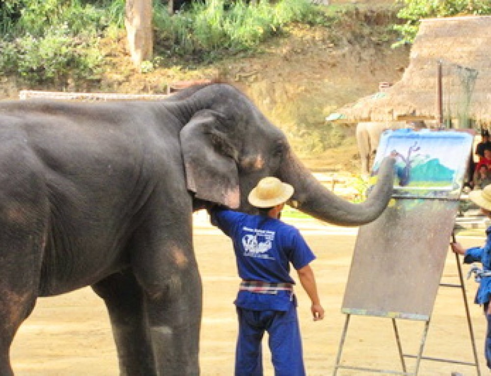 Budget05 : Chiang Mai Elephant Tour – Elephant at Work