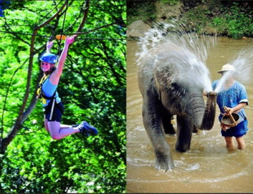 Budget08 : One day Zipline and Elephant Tour