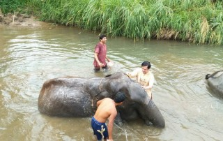 karen and elephant house, eco elephant camp chiang mai, chiang mai animals planet package, chiang mai packages, chiang mai tour packages, mae sa elephant camp