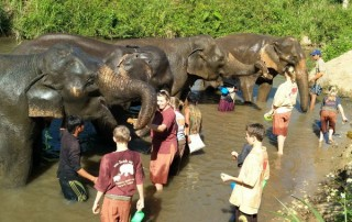 karen and elephant house, eco elephant camp chiang mai, chiang mai package all highlights, chiang mai packages, chiang mai tour packages