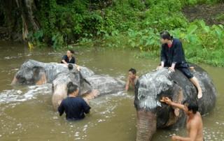 trek mae wang area, trek chiang mai, trekking in chiang mai, elephant care mae wang, mae wang elephant camp
