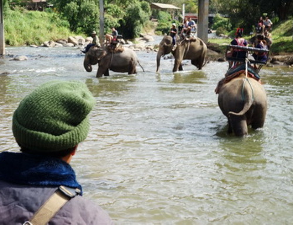 Maetang Elephant Camp Chiang Mai