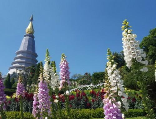 Package03 : Chiang Mai Wonder Package