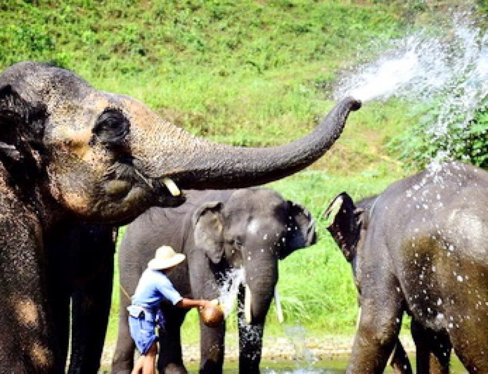 Private Tour12 : Private Tour Chiang Mai Elephant Safari