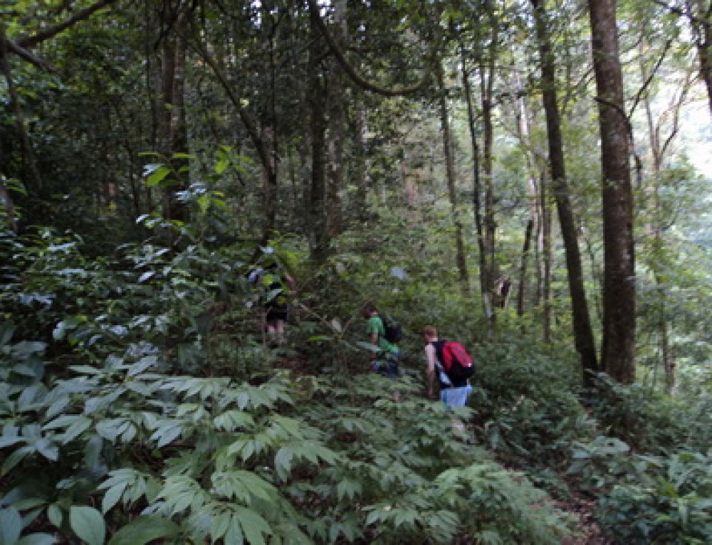 Chiang Mai Trek15 : 2 days 1 night Chiang Mai Private Trekking Doi Inthanon Nation Park