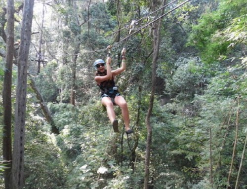 Zipline03 : Eagle Track Zipline