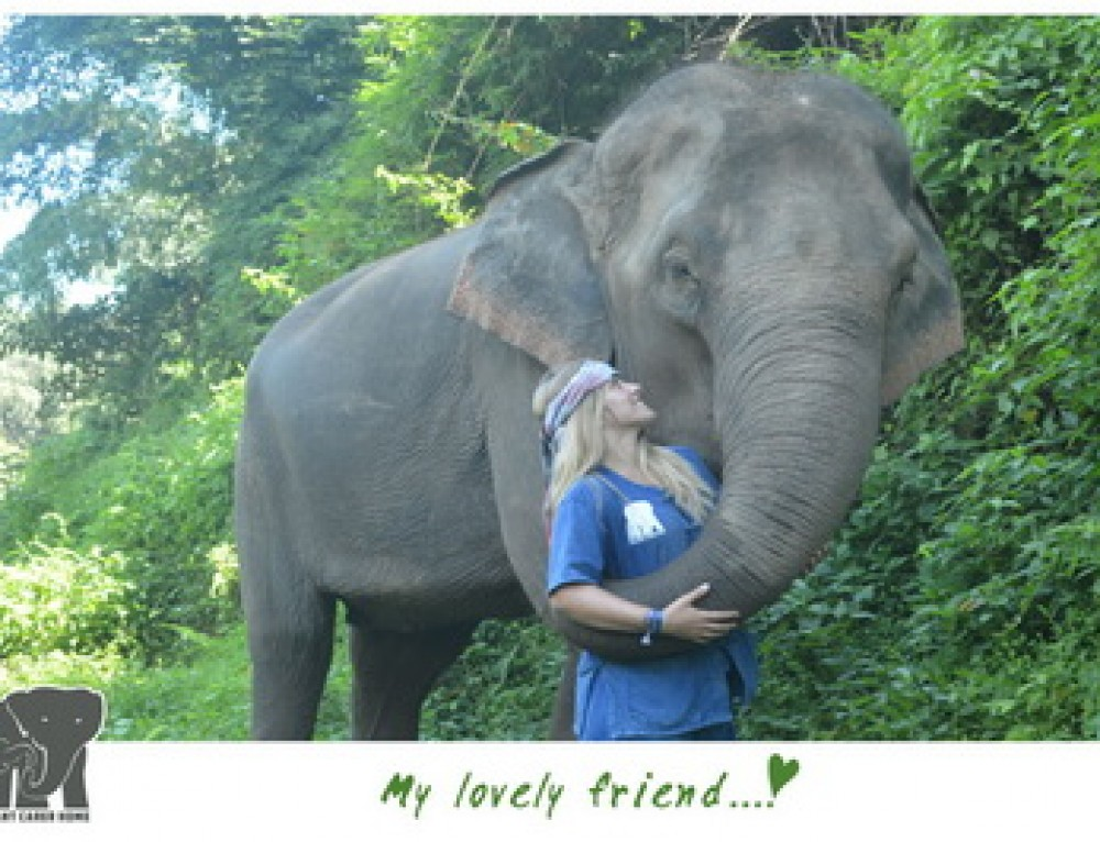 Elephant02 : 1 Day Chiang Mai Elephant Training Program at Elephant Carer Home