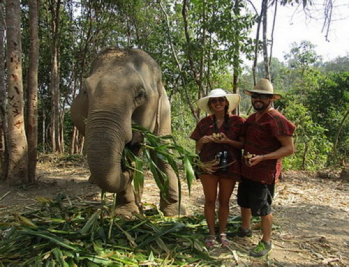 Elephant06 : 2 Day Chiang Mai Elephant Volunteer at Elephant Jungle Sanctuary
