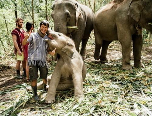 Elephant04 : 1 Day Chiang Mai Elephant Volunteer at Elephant Jungle Sanctuary
