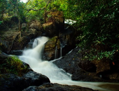 Tham Pla – Namtok Pha Suea National Park
