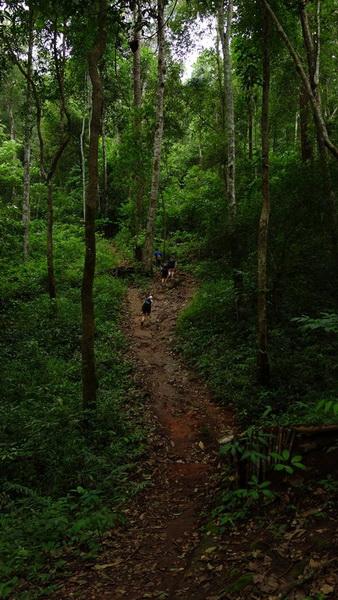 hiking at doi suthep, doi suthep hiking, trekking at doi suthep, wat pa lad hiking