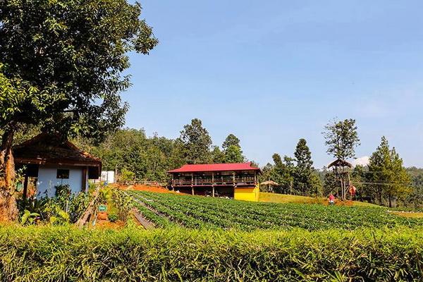 samoeng district, samoeng, strawberry garden in samoeng, strawberry farm in samoeng