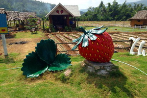 samoeng district, samoeng, strawberry garden in samoeng, strawberry farm in samoeng