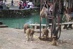 tham pum tham pla cave, tham pum and tham pla cave, tham pum cave and tham pla cave, tham pum and tham pla, monkey cave, monkey cave chiang rai